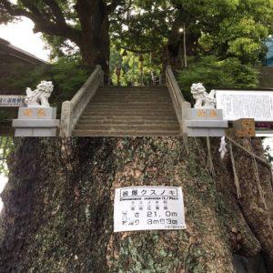 山王神社 被爆クスノキ